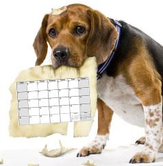 dog-calendar-03