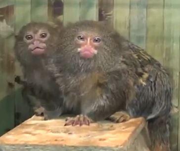 ekzotich-zoopark