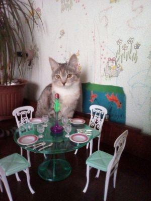 koshka-za-stolom
