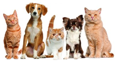Cats_Dogs_Sitting_346493