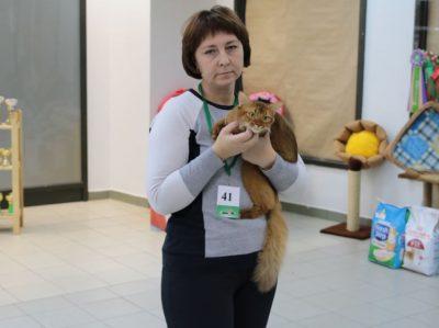 кошка 19