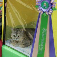 кошка с розеткой