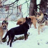 бродячие собаки спасли