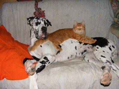 кот на псе