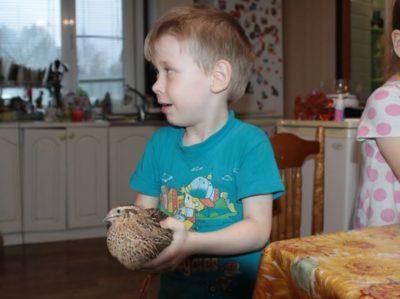 мальчик держит перепелку