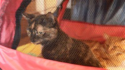 дворовая кошка на выставке