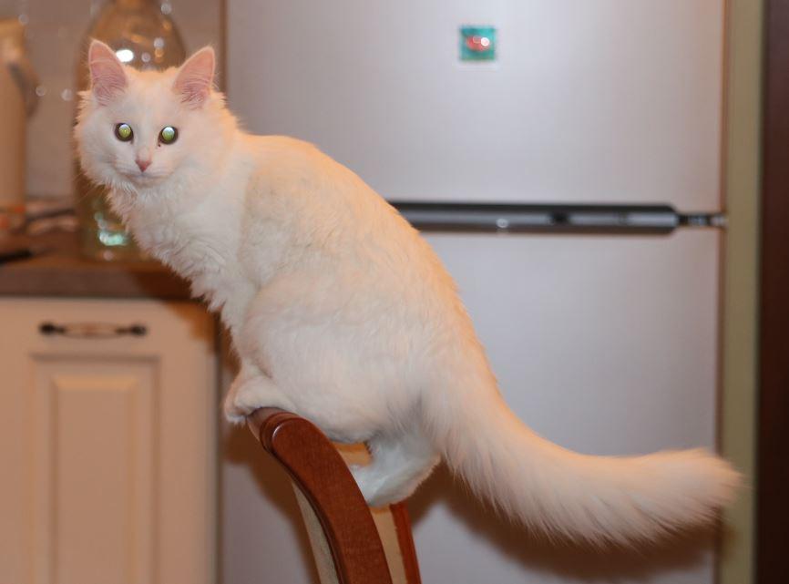 кошка повышенной ловкости