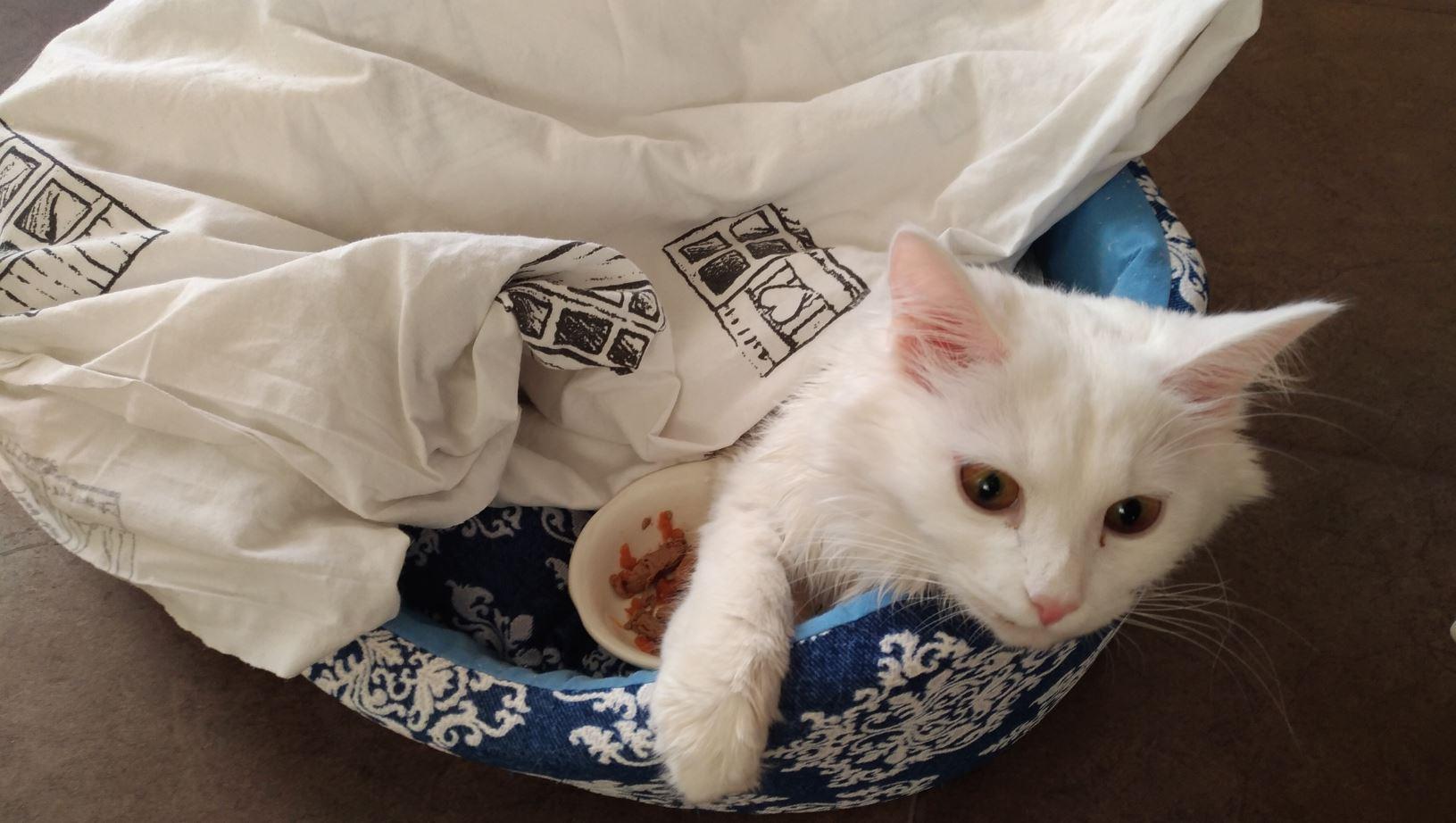 после операции кошки