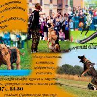 собаки в День Победы