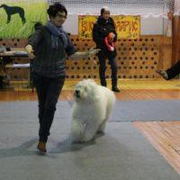 выставка собак виола поларис 04-2017