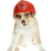 dog-Fireman_WP