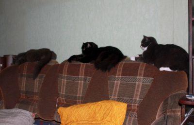 кошки на диване