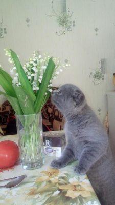 котик нюхает цветы