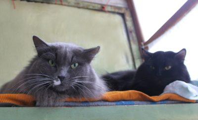 строгий взгляд кота