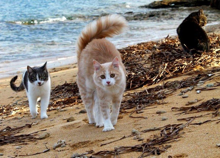 cat2705-6ryzz