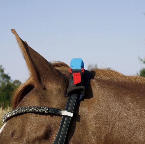финтнес трекер лошадь