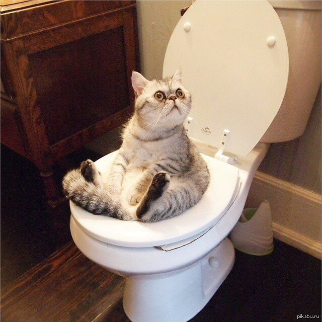 Заболевания мочеполовой системы у котов