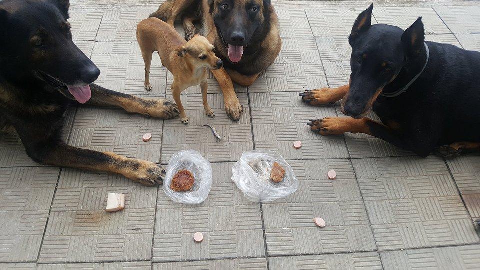 собака отказ есть еду