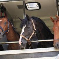equine-blog-1200x767