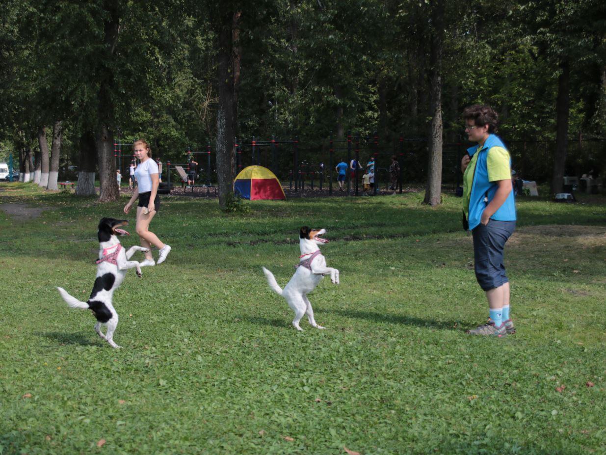 собаки служат на задних лапах