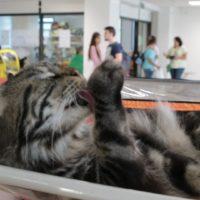 выставка кошек тверь 2017