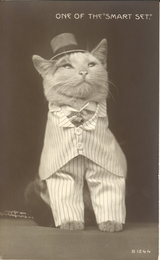 14930860-r3l8t8d-650-cat-in-hat-and-suit
