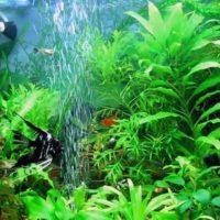акариум водоросли
