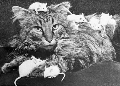 кот и мыши