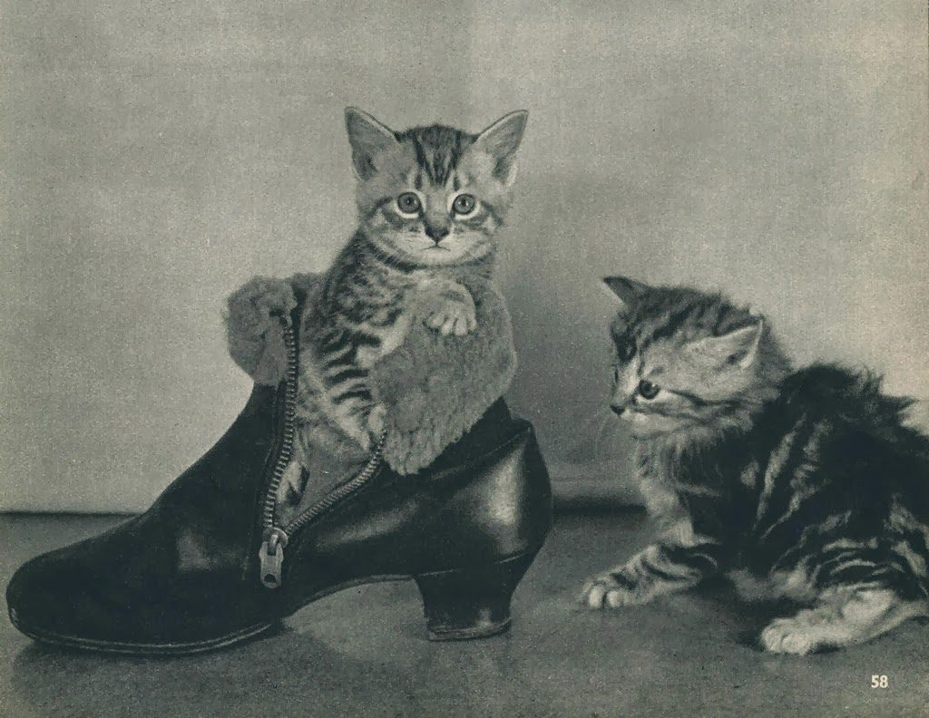 Cats from the 1950's (2)
