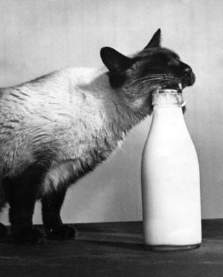 Ретро-кошки-39