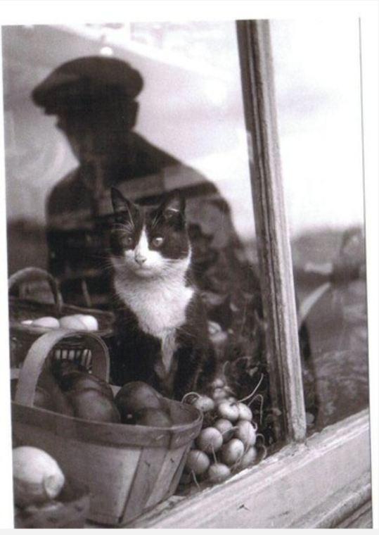 Ретро-кошки-40