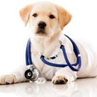 sobaka-veterinar-2