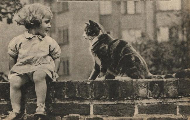 старинные-открытки-с-котами-4