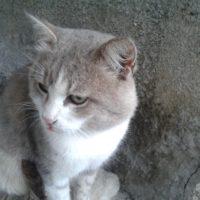 воспитанный кот тверь