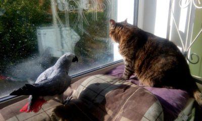 жако и кошка 2