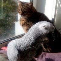 жако и кошка