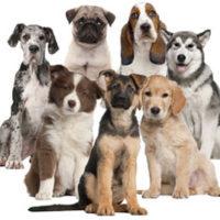 dog-breeds (2)