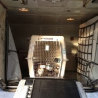 Dog-in-cargo-of-a-plane
