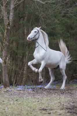 конь ЖораТверь