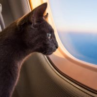 GettyImages-657734390-cat-plane-1120