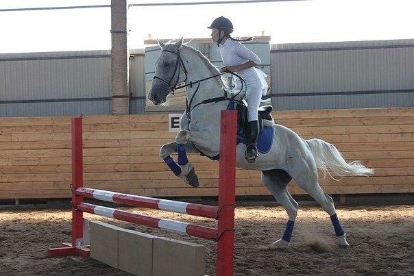 конь Жора Тверь