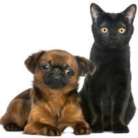регистрация животных