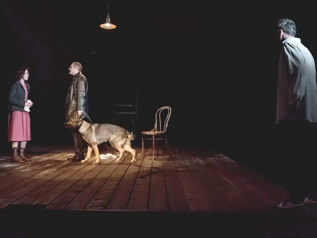 собаки в театре 2