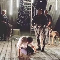 собаки в театре