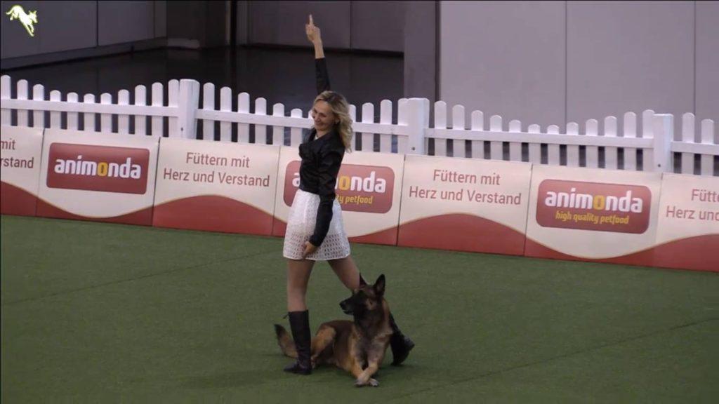 чемпионат по танцам с собаками 1