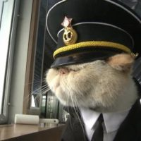 кот на старпом