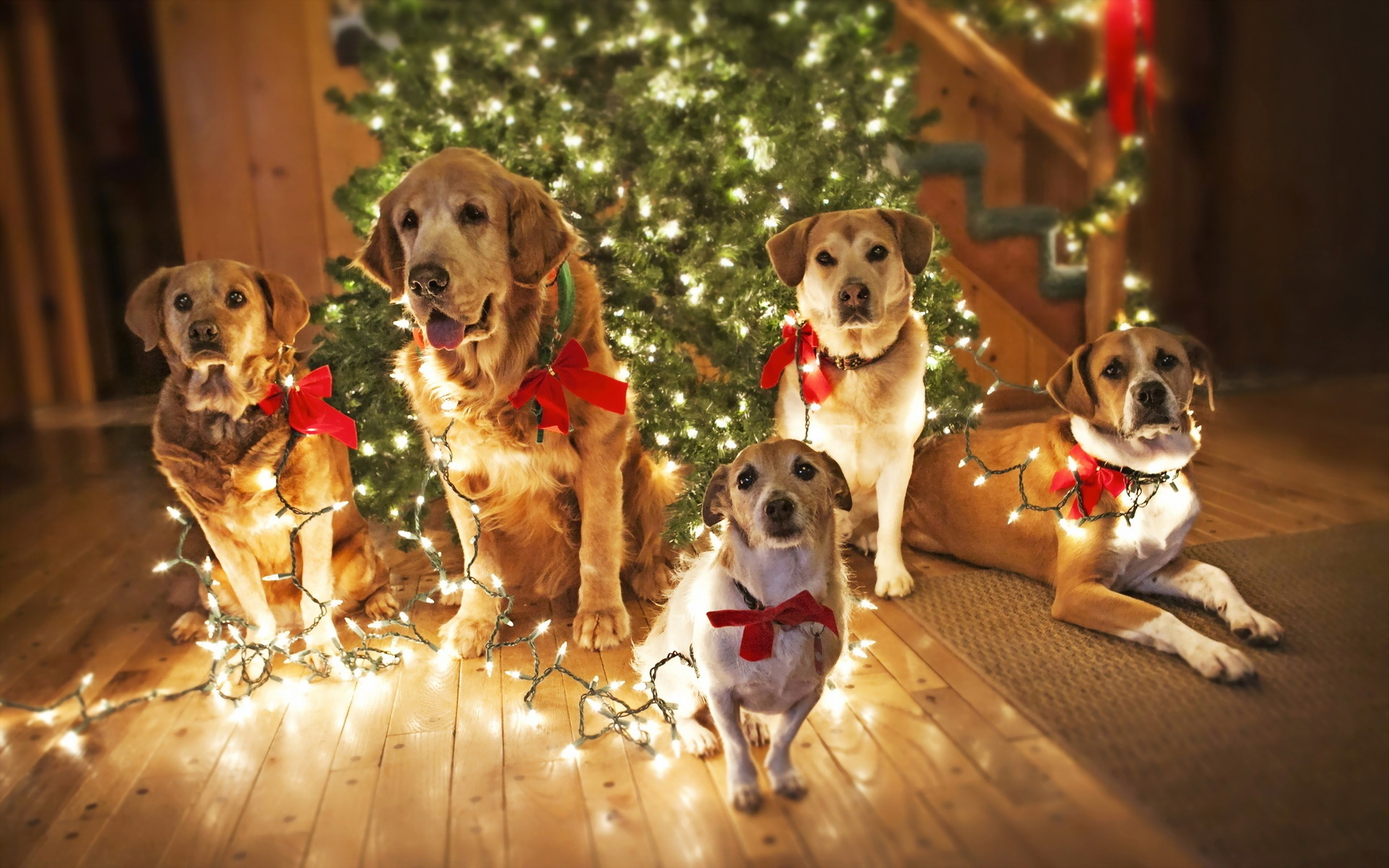 dogs-xmastree-featured