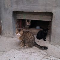 кошек пустят в подвал
