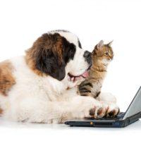 кошка и собака смотрят в ноут