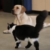кот тренер собак